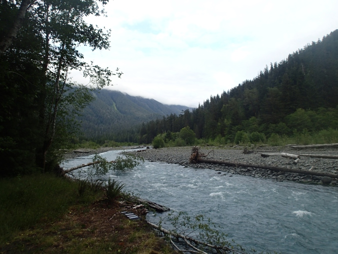 Hoh River At Lewis Meadows