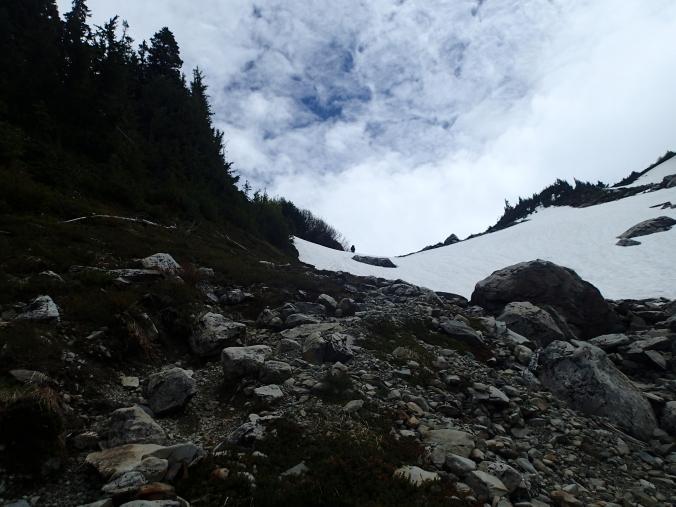 Snow In The Glacier Meadows