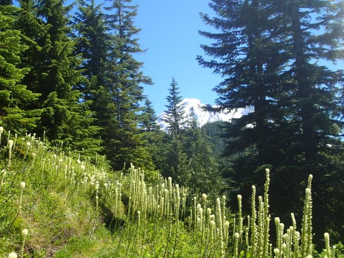 Mount Rainier Above Golden Lakes