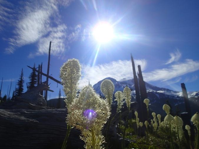 Mount Rainier And Bear Grass